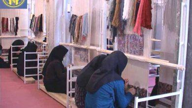 Photo of زنان شیروانی تمایلی برای کار در کارگاه های قالیبافی را ندارند